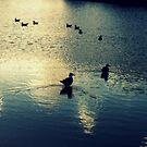 Sonnenuntergang ... Vögel nach Hause gehen von Evita