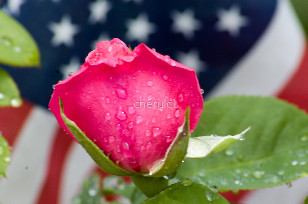 Patriotic Rose by cherylc1