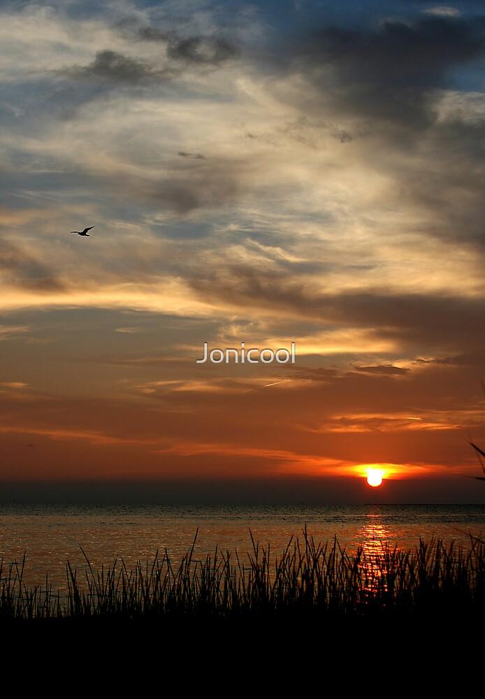 Soaring at Sunset by Jonicool