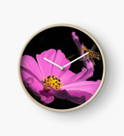 Bee coming into land  Clock