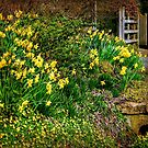 Spring has Sprung! by ScenicViewPics