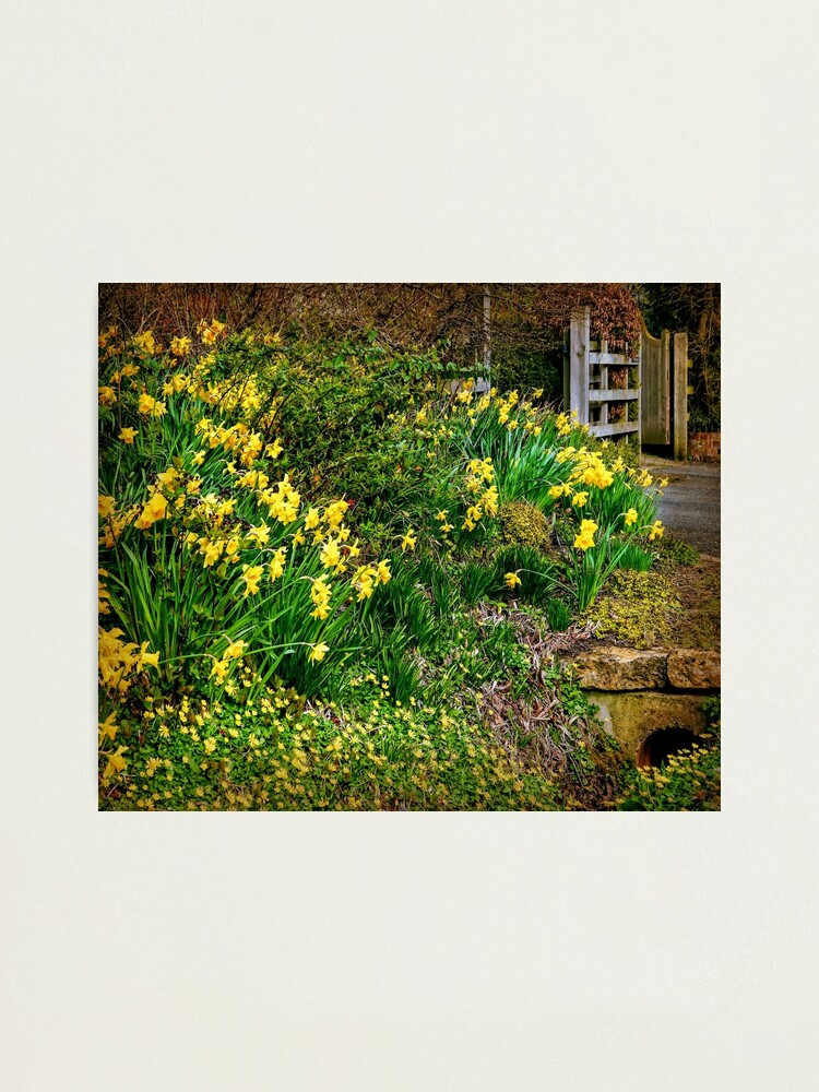 Alternate view of Spring has Sprung! Photographic Print