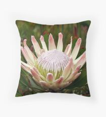 South African King Protea flower Throw Pillow