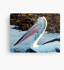 Pelican at Stony Point II Metal Print