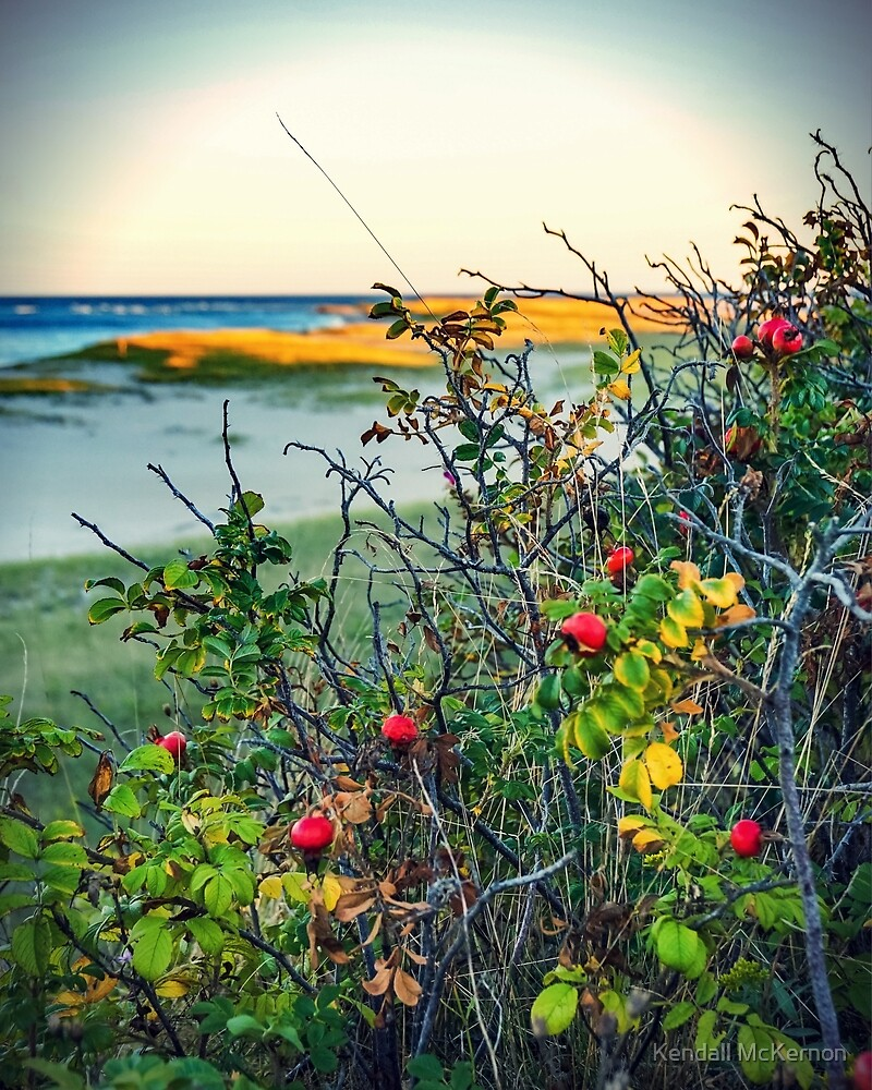 Beach and berries by Kendall McKernon