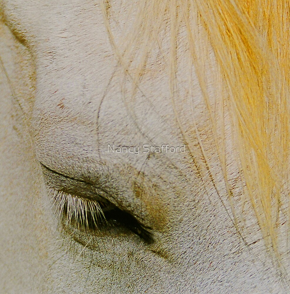 Tired Horse by Nancy Stafford