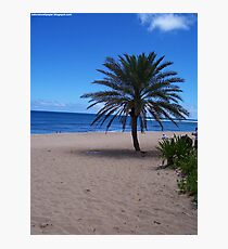Palm Tree In Hawaii Photographic Print