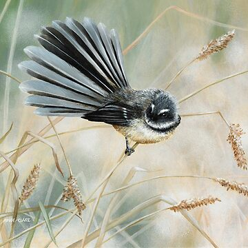 'Morning Light - Fantail' square by MCColyer