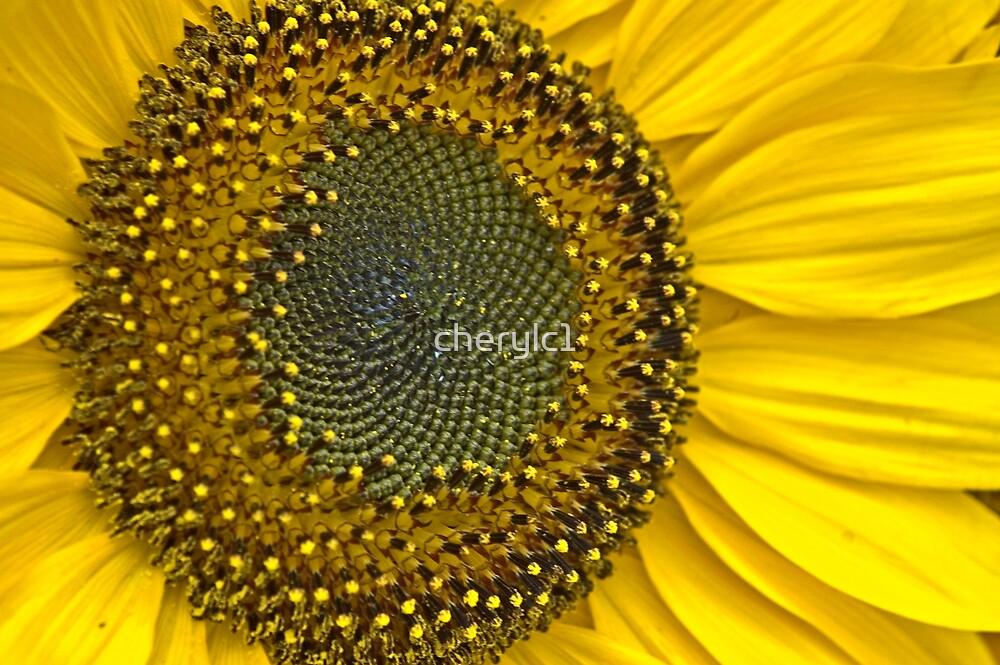 Sunny Delight by cherylc1
