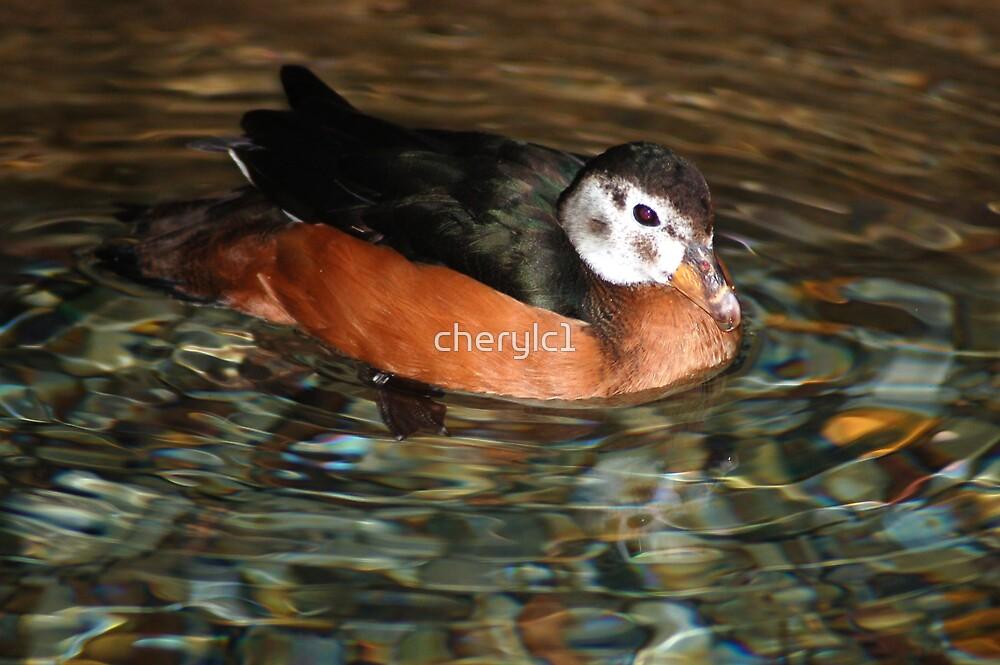 Ducky Days by cherylc1