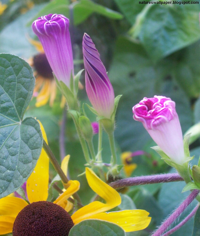 Beautiful Cone Shaped Flowers by 1greenthumb
