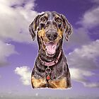 Doberman Pinscher to Fall in Love With  by didielicious