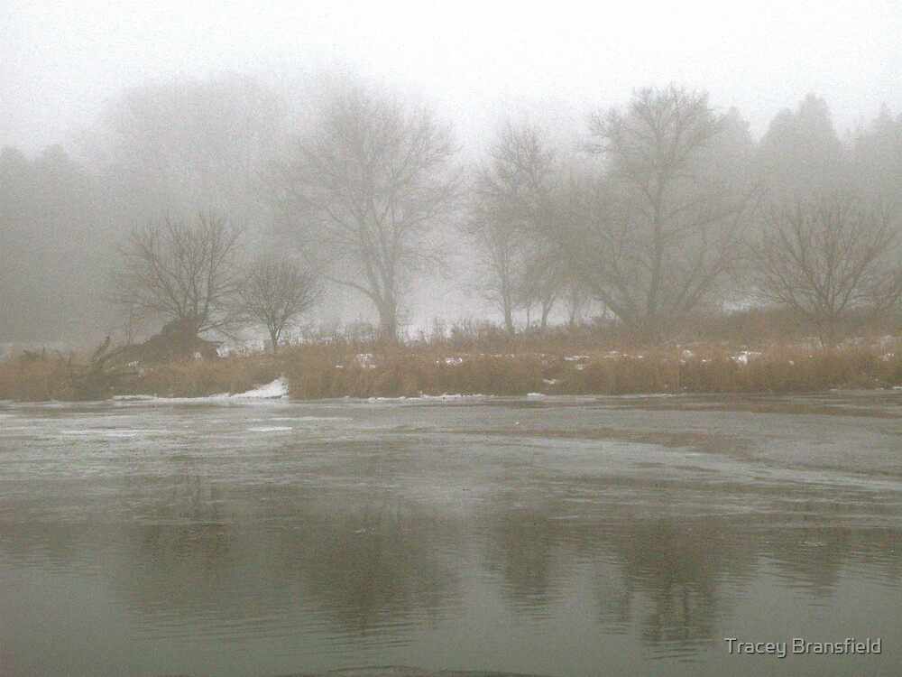 Refections in the Fog by Tracey Bransfield