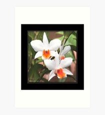 Painted Orchids Art Print