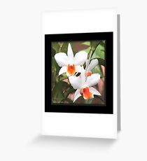 Painted Orchids Greeting Card