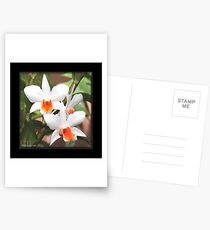 Painted Orchids Postcards