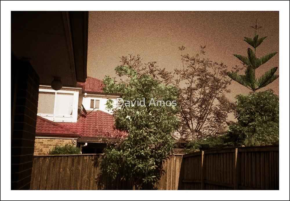 My backyard - Pinhole photography by David Amos