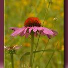 Summer Pastels by Sheryl Gerhard