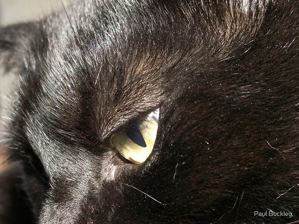 pongo the cat by Paul Buckley