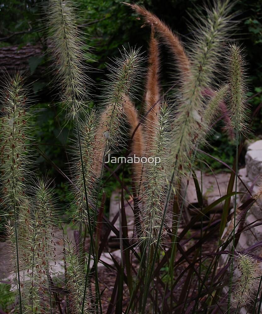 More Ornamental Grasses by Jamaboop