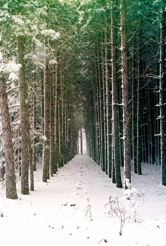 Pretty Trees by Mark Mcdonough