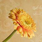 Gerbera Thank You Card by Sandra Foster