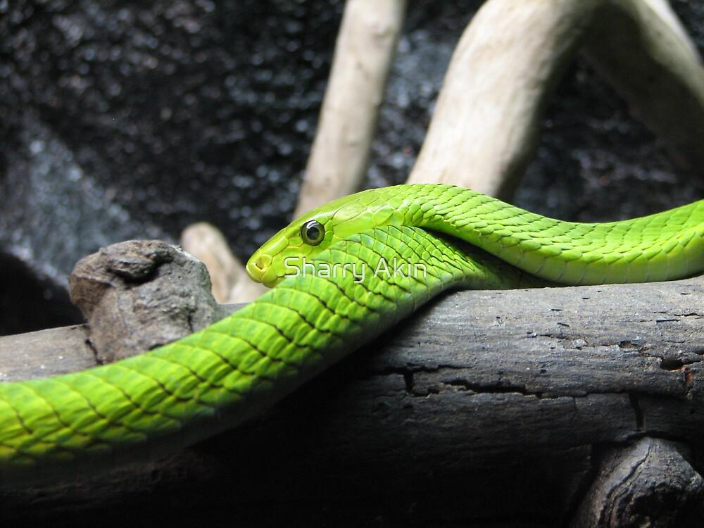 Green Mamba by Sharry Akin