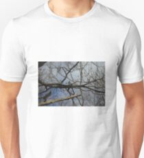 Early Eastern Phoebe Unisex T-Shirt