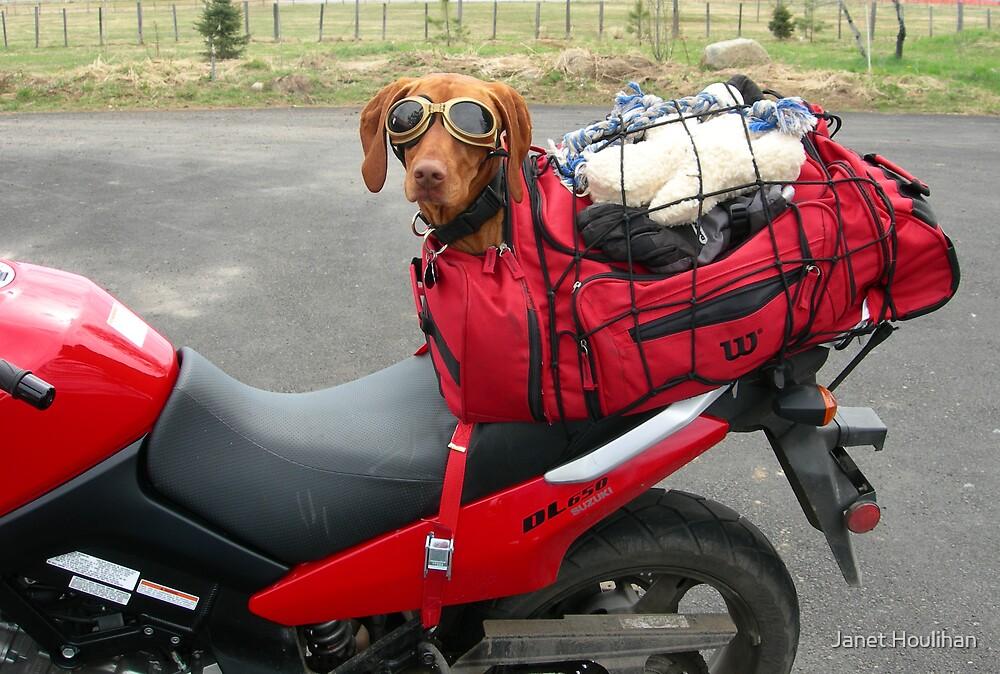 Biker Dog by Janet Houlihan