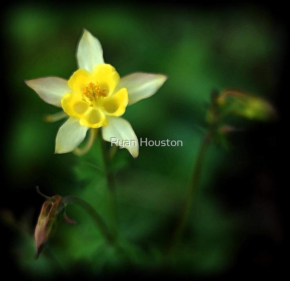 Honeysuckle by Ryan Houston