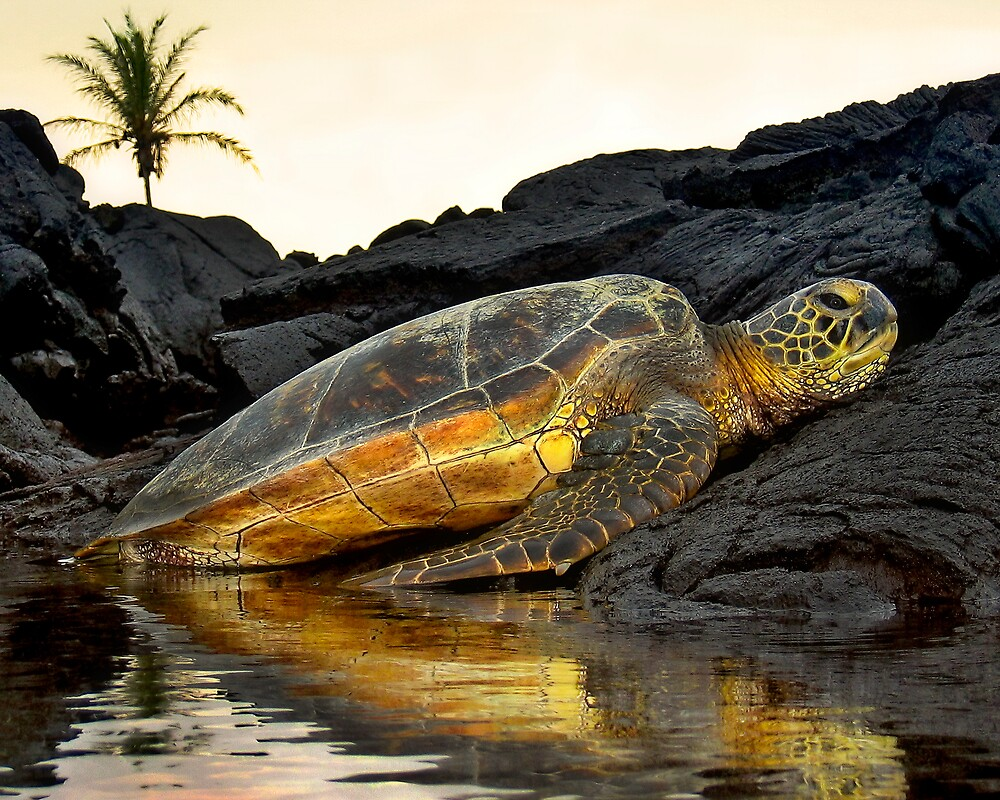 Turtle resting by Yves Rubin