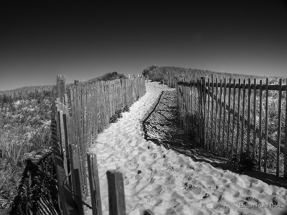 Trail through the Dunes by Brian Puhl IPA