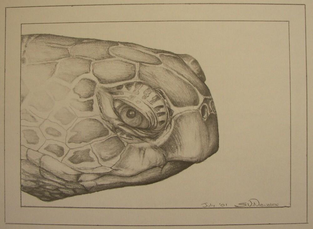 Turtle by Stephanie Nienaber