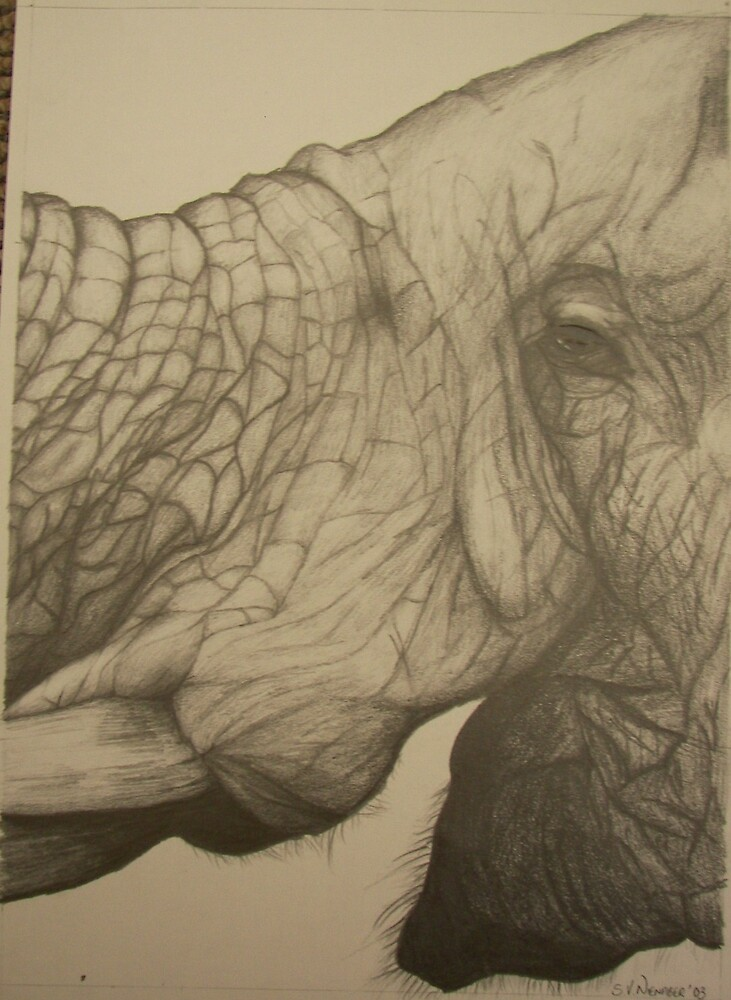 Big 5: Elephant by Stephanie Nienaber