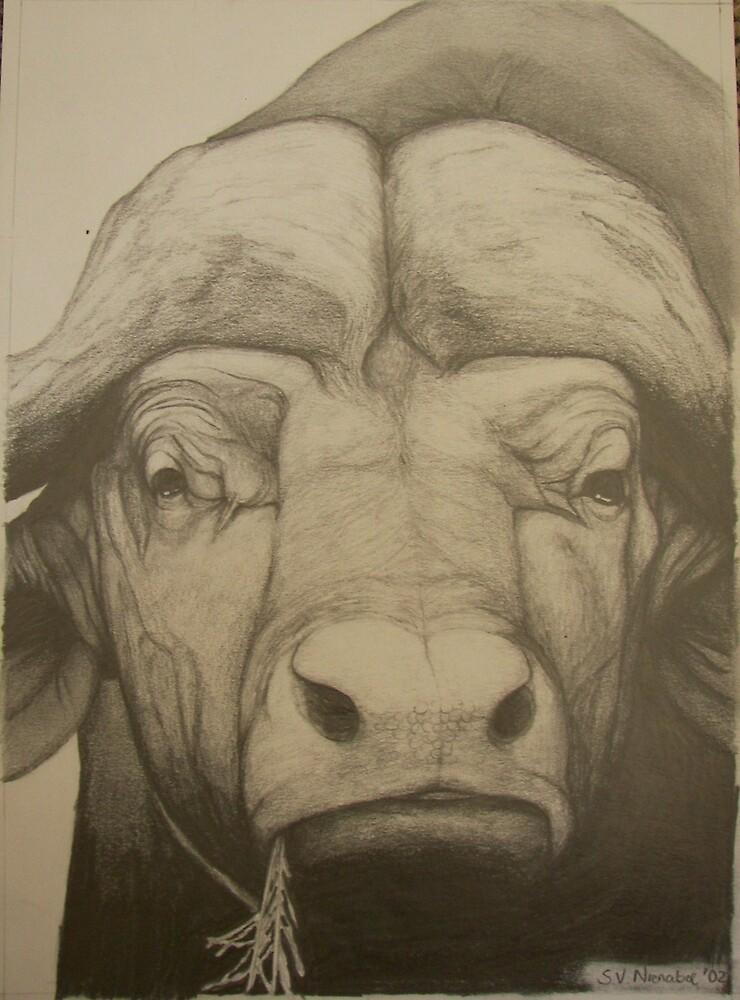 Big 5: Buffalo by Stephanie Nienaber