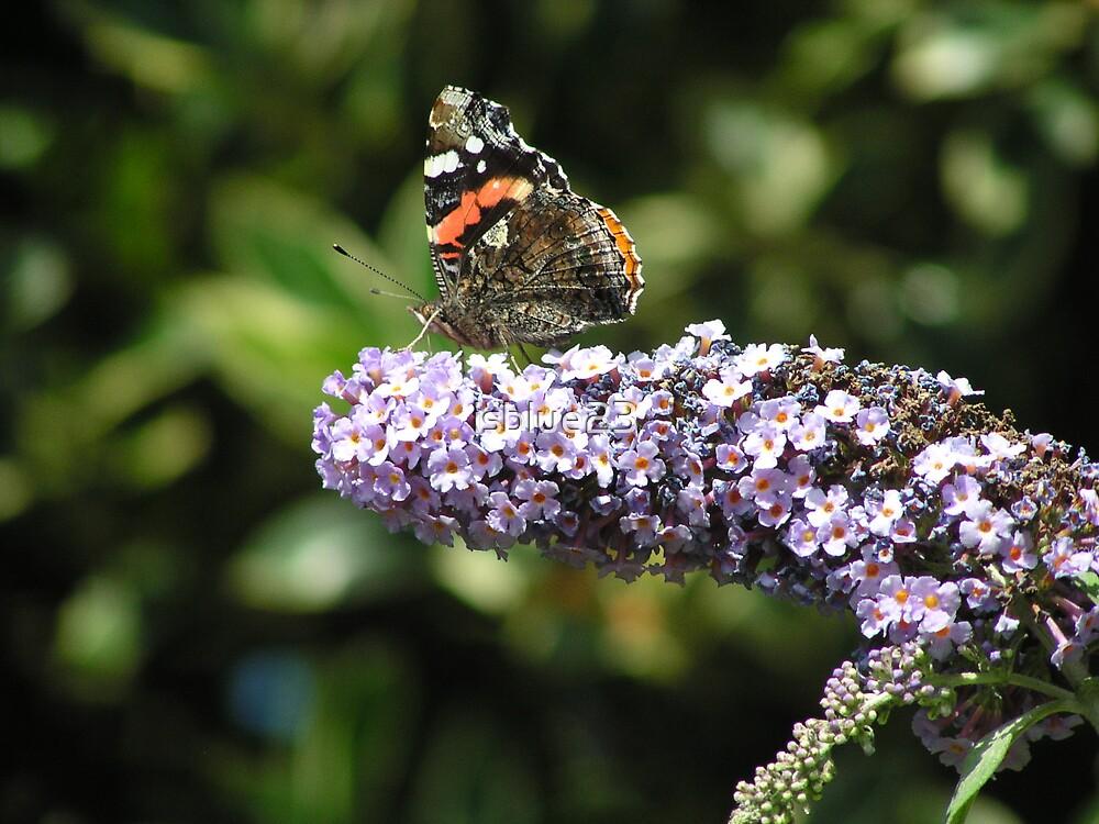 Butterfly by isblue23