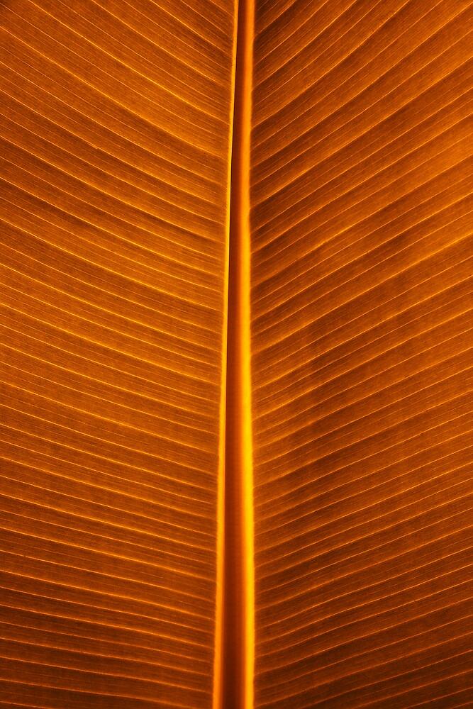 Primal Colors III by Yves Rubin