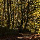 Lane at Lumsdale Falls by John Dunbar