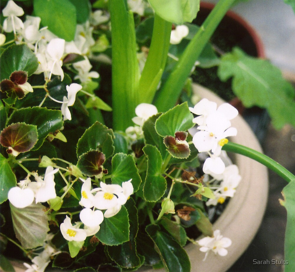 Potted Flowers by Sarah Stults
