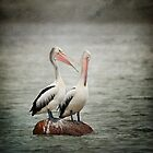 Pelican catch up by Malcolm Heberle