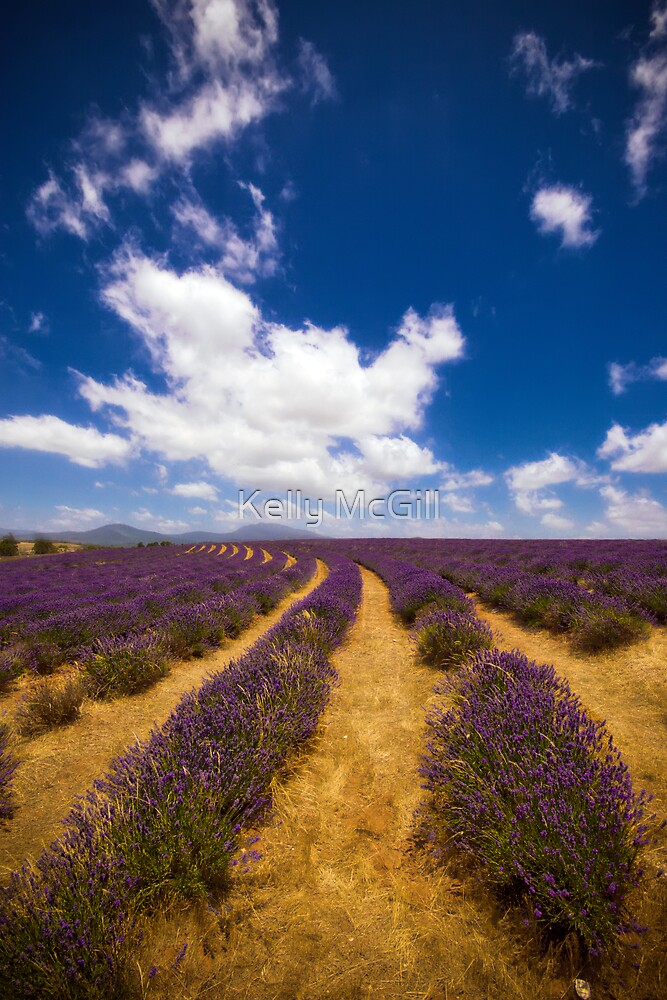 Bridestowe Lavender Farm by Kelly McGill