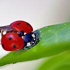 THE STAR : 2 (h) coccinelle-ladybug by Olao-Olavia / Okaio Créations 2015  by fz 1000 and 450.000 photos by . Okaïo