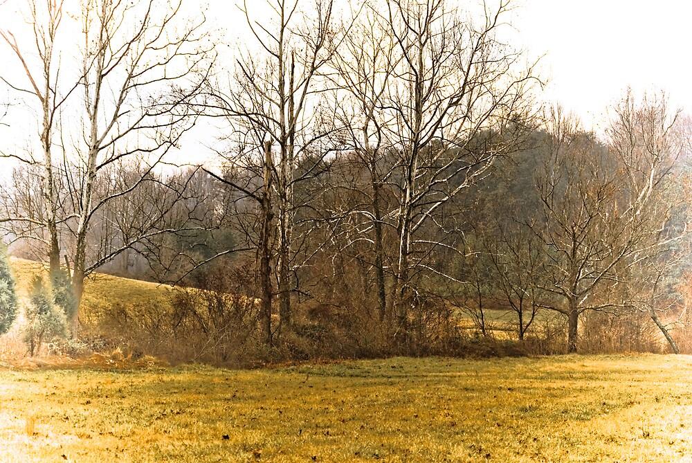 Treeline by Rod  Adams