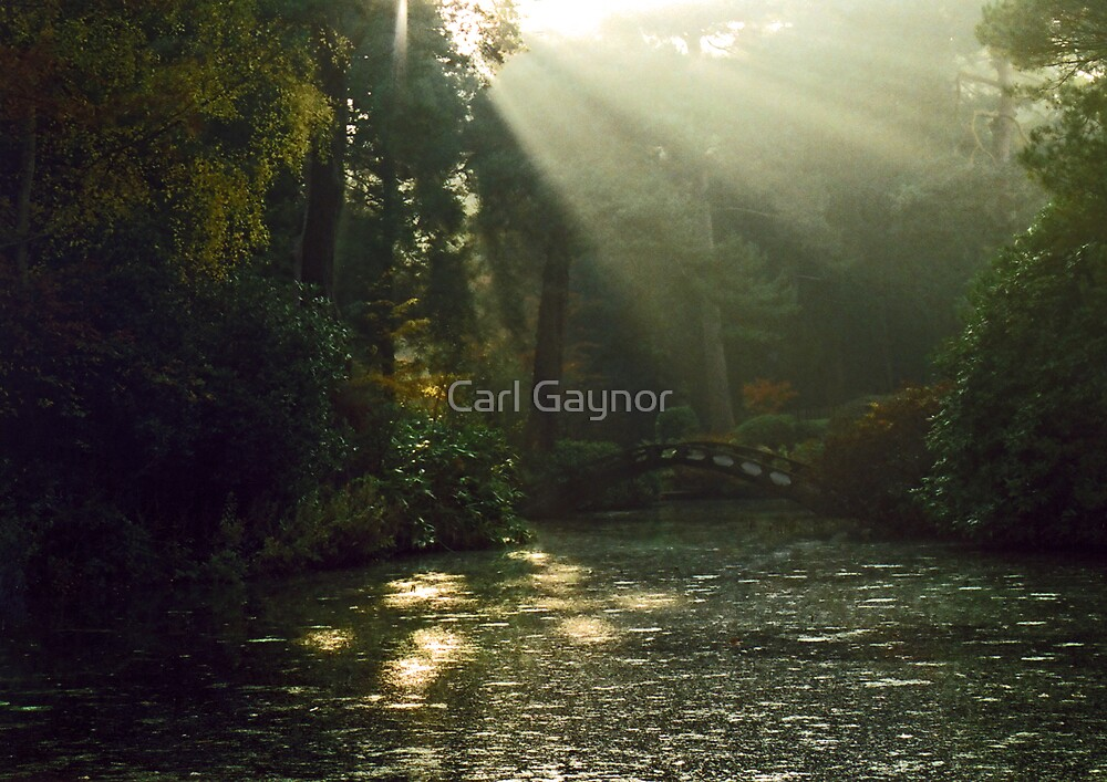 Winter Approaching  by Carl Gaynor