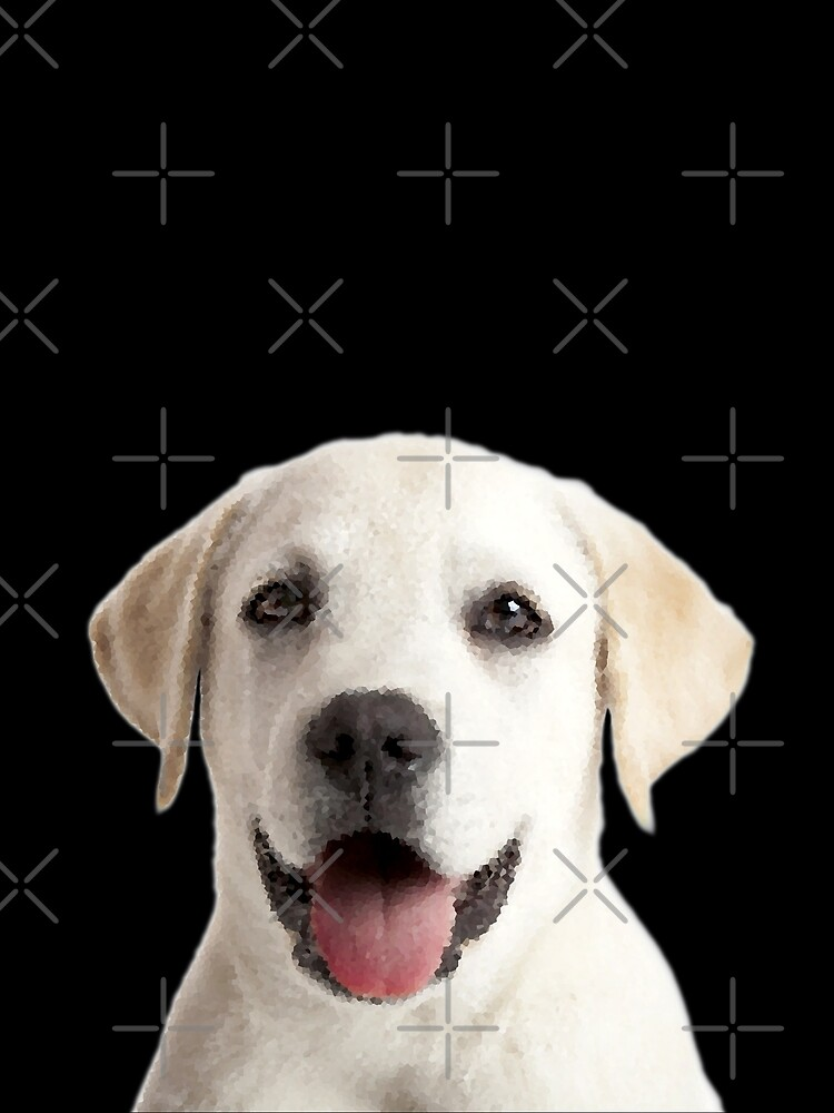 Cachorro Labrador de storebycaste