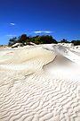 Lancelin Sand Dunes by Christine Smith