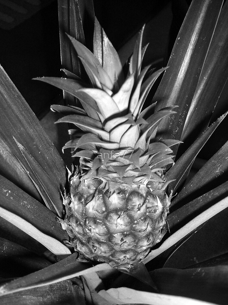 pineapple by anfa77