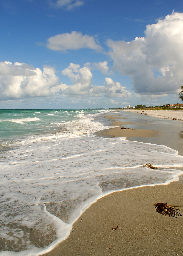 LongBoat Key, FL by brandy lacroix