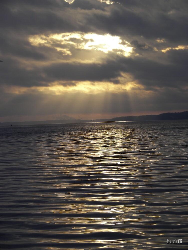 morning rays by budrfli