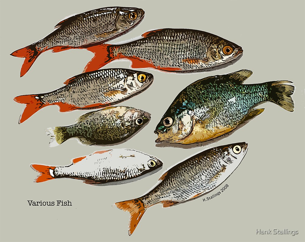 Various Fish by Hank Stallings